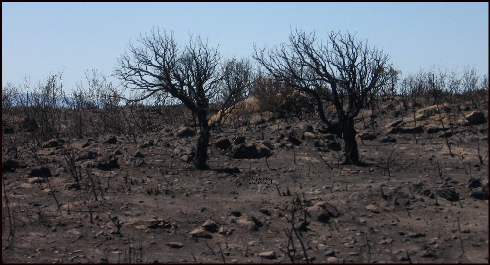 Back to black - scene of bush fire in the Sotogrande area of Cadiz province, Andalucía.